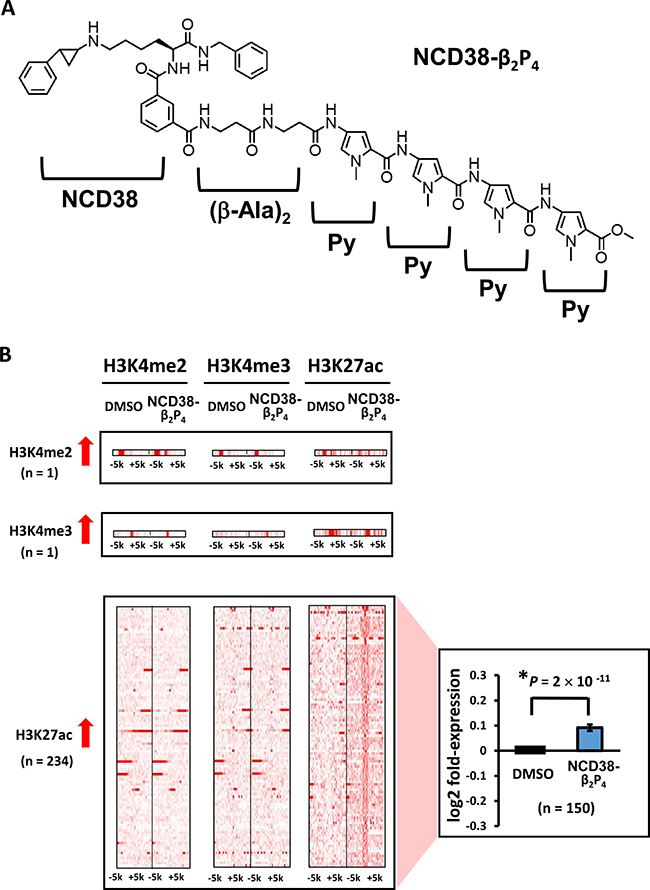 Alterations in histone modification by NCD38-β2P4 treatment.