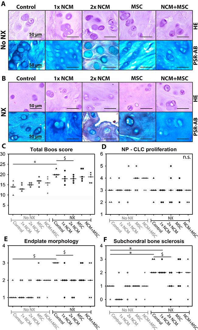 Notochordal cell-derived matrix (NCM) improves canine intervertebral disc (IVD) histology.
