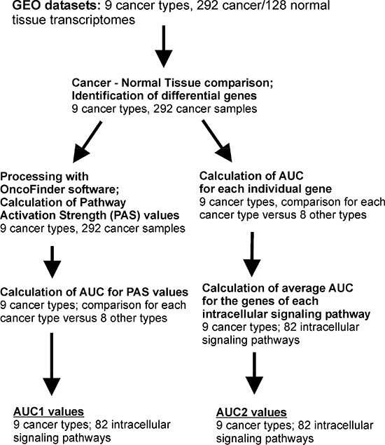 Outline of the bioinformatics procedures used to calculate AUC1 and AUC2 values.