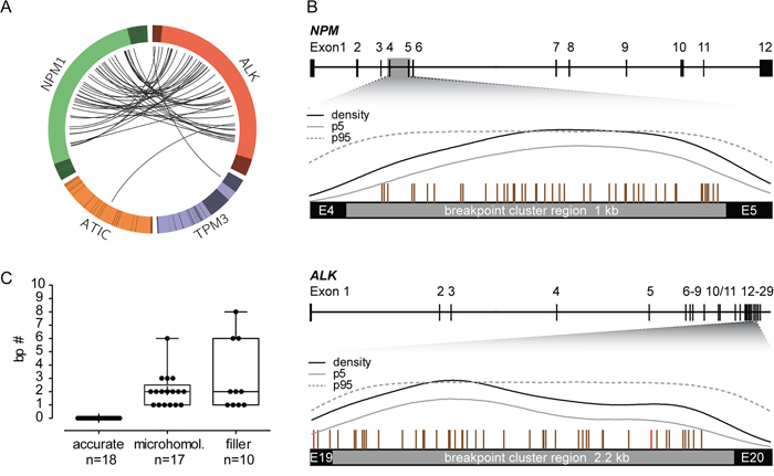 Breakpoint distribution in ALK and the respective fusion partner gene in 45 pediatric ALK-positive ALCL patients.