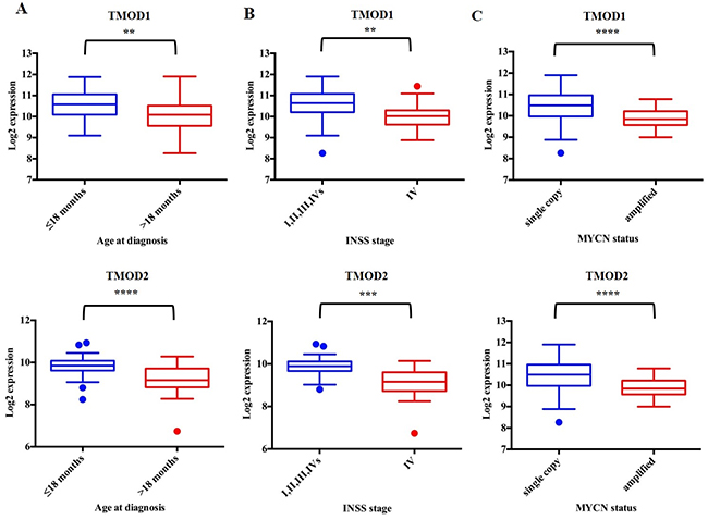 TMOD1 and TMOD2 expression levels correlate with favorable clinical and molecular characteristics.