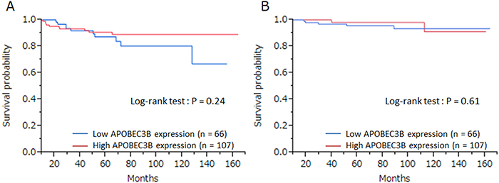 The relationship between APOBEC3B mRNA expression and prognosis.