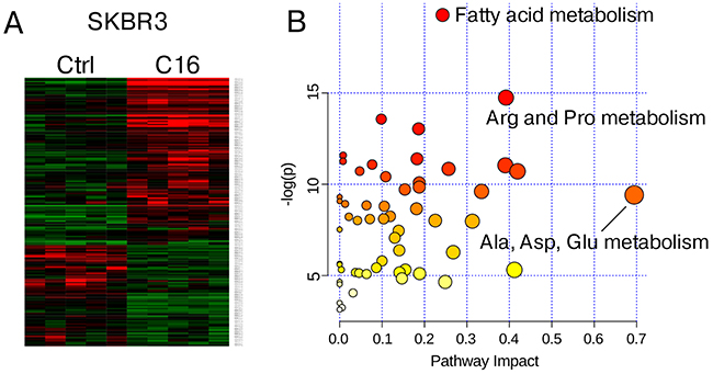 Metabolite profiling of palmitate-treated HER2/neu-positive SKBR3 breast cancer cells.