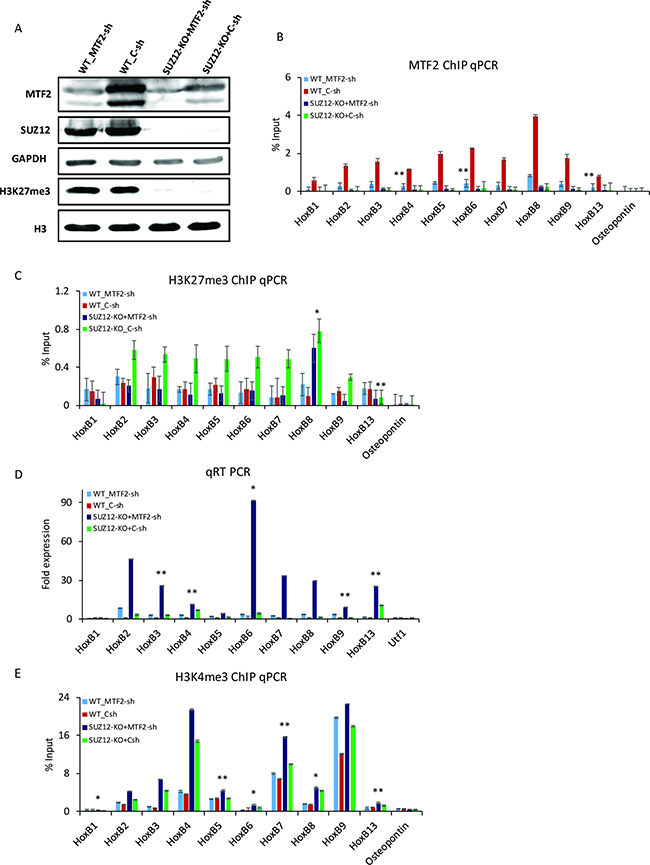 MTF2 regulates H3K27me3 at Hox B loci in the absence of SUZ12.