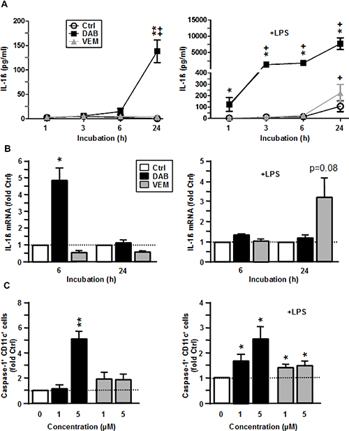 VEM and DAB enhance IL-1β expression on transcriptional level and by inflammasome activation.