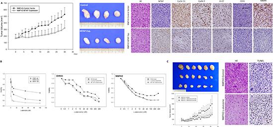 In vivo tumor suppressive function of MTAP and the inhibition of L-alanosine in MTAP-deficient myxofibrosarcoma.