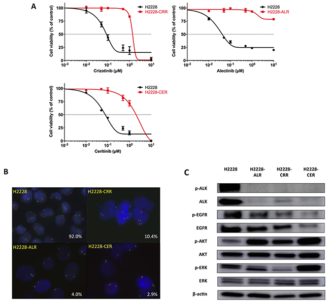 Establishment of ALK-TKI–resistant H2228 cells.
