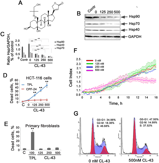 CL-43 inhibits the expression of three chaperones controlled by HSF1 and inhibits proliferation of HCT-116 cells.