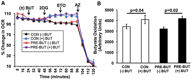 Butyrate has no effect on its oxidation in primary colonocytes.