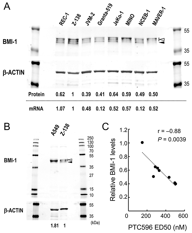 Basal levels of BMI-1 determine the sensitivity of mantle cell lymphoma (MCL) cells to the BMI-1 inhibitor PTC596.