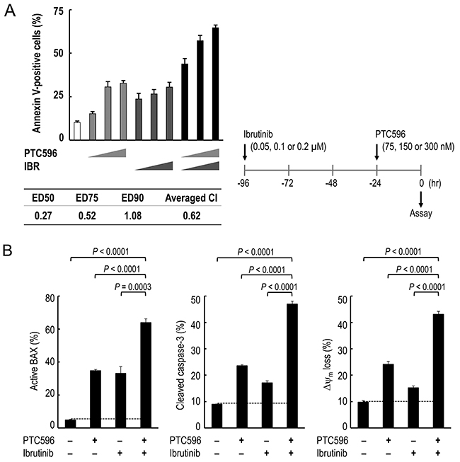 PTC596 and ibrutinib cooperatively induce mitochondrial apoptosis in mantle cell lymphoma cells.