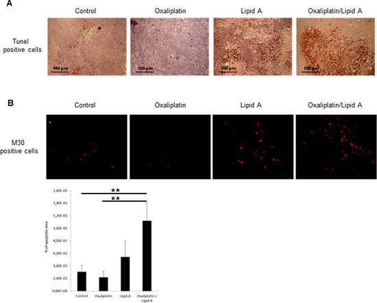 Lipid A induced apoptosis in tumor cells in vivo, increased by oxaliplatin.
