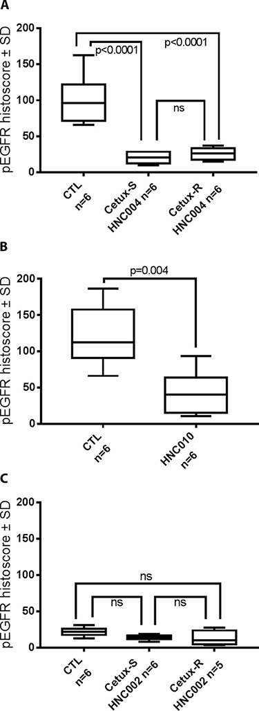 pEGFR histoscore (Box Plot) performed on the tumors harvested at day 8 after sacrificing the mice used in the imaging experiments.