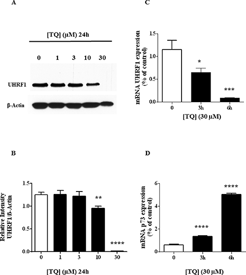 Effect of TQ on UHRF1 protein, UHRF1 mRNA and p73 mRNA.