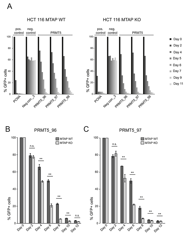 A CRISPR depletion assay confirms the differential requirement of PRMT5 in MTAP isogenic HCT 116 cells.