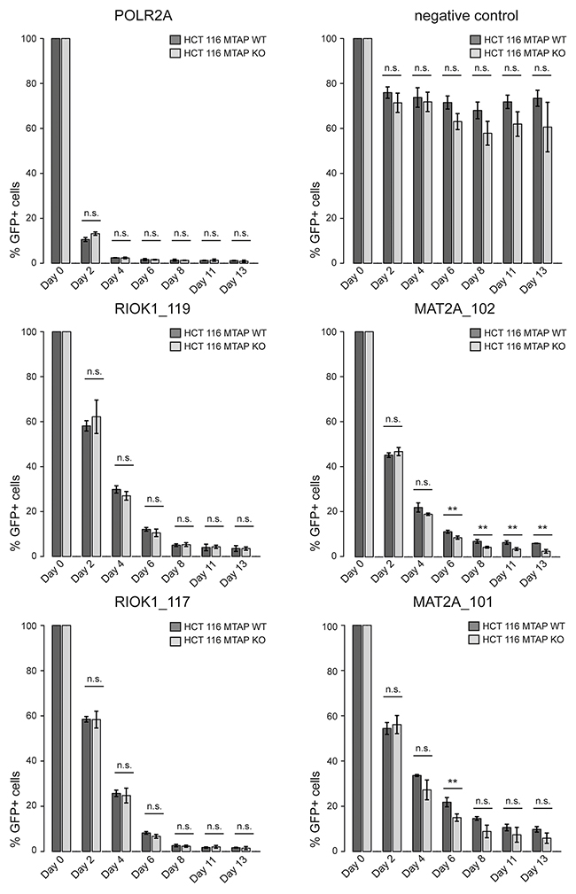 CRISPR based depletion assays reveal no differential requirement between MAT2A and RIOK1 in MTAP isogenic cell lines.