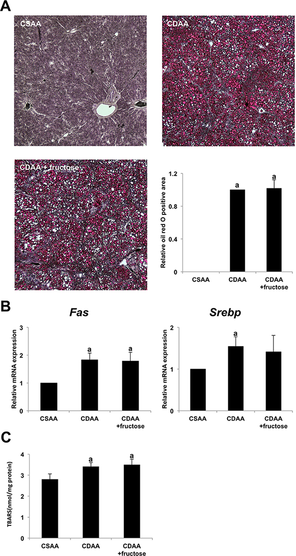 The effect of fructose administration on hepatic steatosis in the CDAA-induced steatohepatitis.