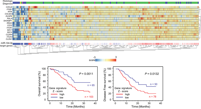 Combination analysis with heatmap of 15 target genes related to poor prognosis in PDAC.