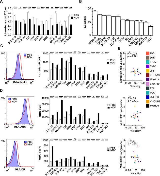 Lytic and immunogenic effects of NDV in human bladder cancer cells.