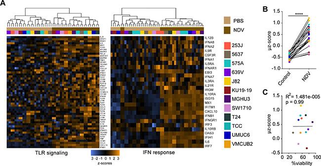 NDV induces type 1 interferon response in human bladder cancer cells.