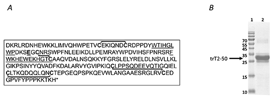 trT2-50 sequence and expression.