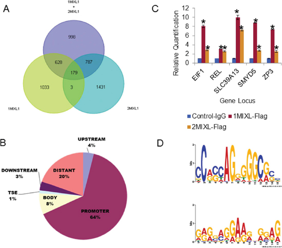 Identification of direct MIXL1 transcriptional targets by ChIP-Sequencing.