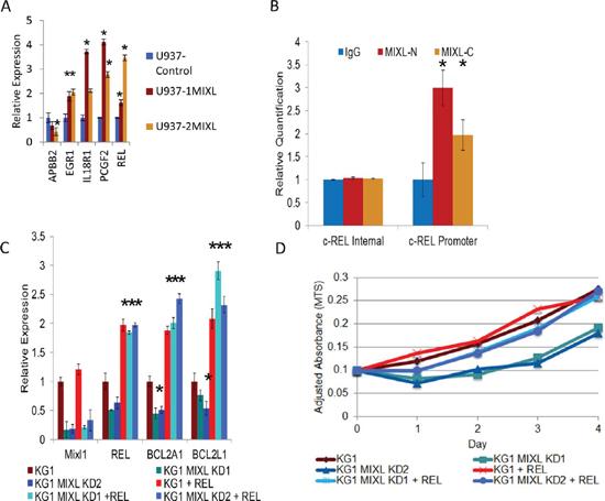 MIXL1 up regulates c-REL expression to enhance anti apoptotic gene transcription.