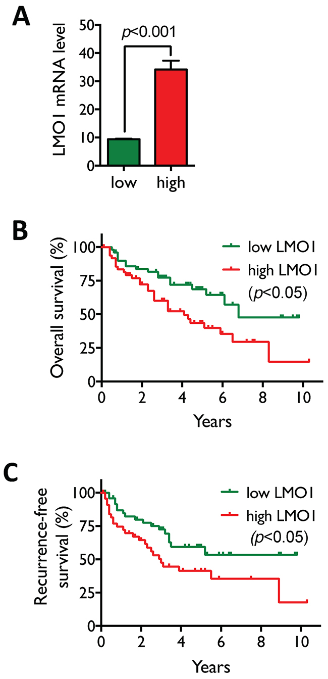 High LMO1 levels correlate with poor survival of lung cancer patients.