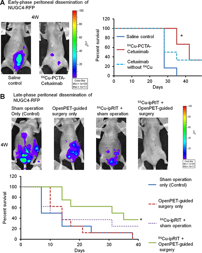 Integrated 64Cu therapy for peritoneal-dissemination models with NUGC4-RFP cells.