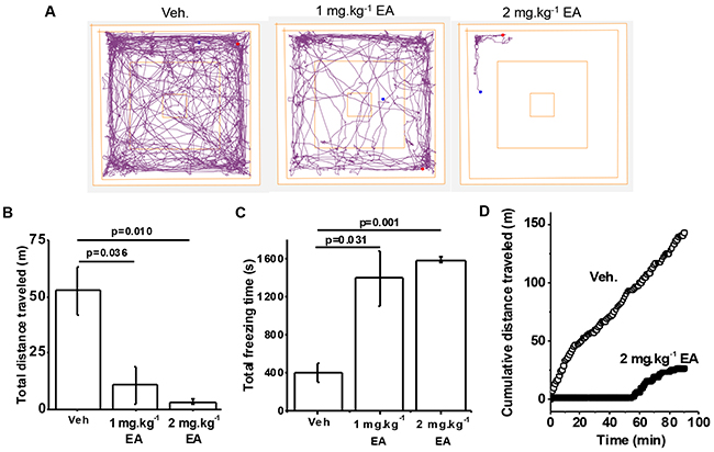 Adverse reaction to (-)-Englerin A (EA) in wild type mice.