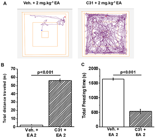 Full protection by a small-molecule inhibitor of TRPC4/TRPC5 channels.