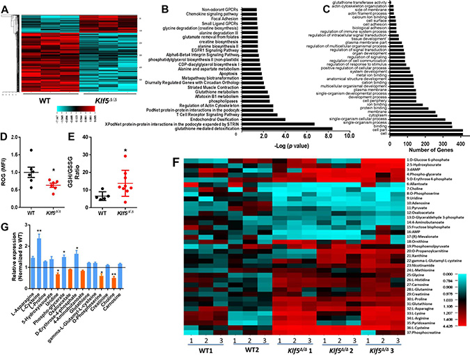 Decreased GST expression, reduced ROS, increased GSH/GSSG ratio and dysregulated metabolome in Klf5Δ/Δ leukemic B-cell precursors.