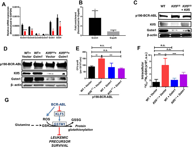 Glutathione-S-transferase activity restores tumor promotion activity of Klf5-deficient B-cell precursors.