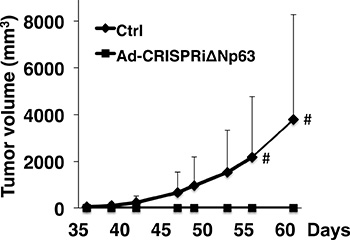 Ad-CRISPRiΔNp63 significantly reduces lung SCC growth in a mouse xenograft model.