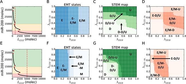 Hybrid E/M and D/U (stem-like) phenotypes overlap over a large variation of EMT-STEM circuit coupling strength.