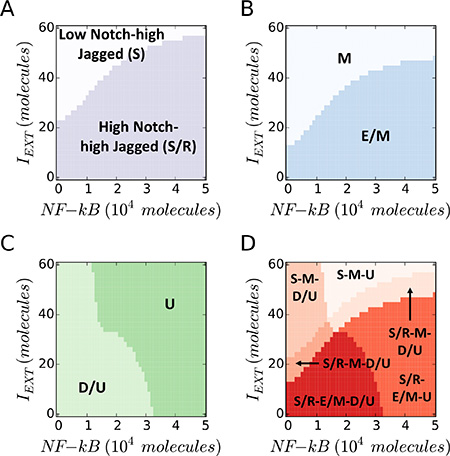 """EMT Induction and NF-κB overexpression push cancer cells out of the """"S/R-E/M-D/U window""""."""