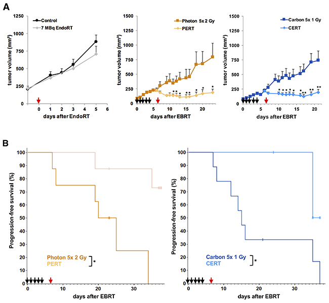 Combined treatment with EBRT and 131I-Cetuximab improves A431 tumor growth inhibition and progression-free survival.