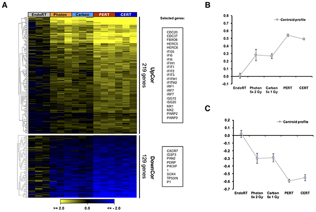 Therapy dependent gradual regulation of gene expression in A431 tumor.