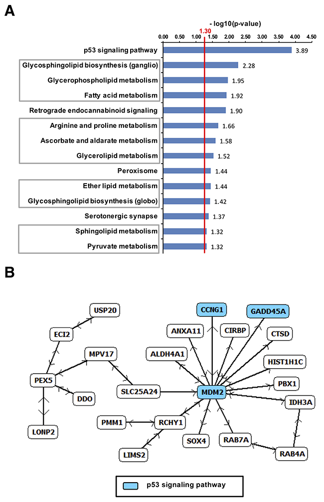 Upregulated genes in B16F10-tumors after dual treatment.