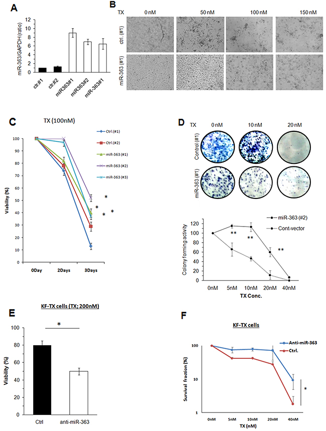Establishment of miR-363 overexpressing stable clones of KF cells.