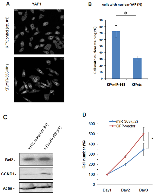 miR-363 induces activation of Hippo pathway.