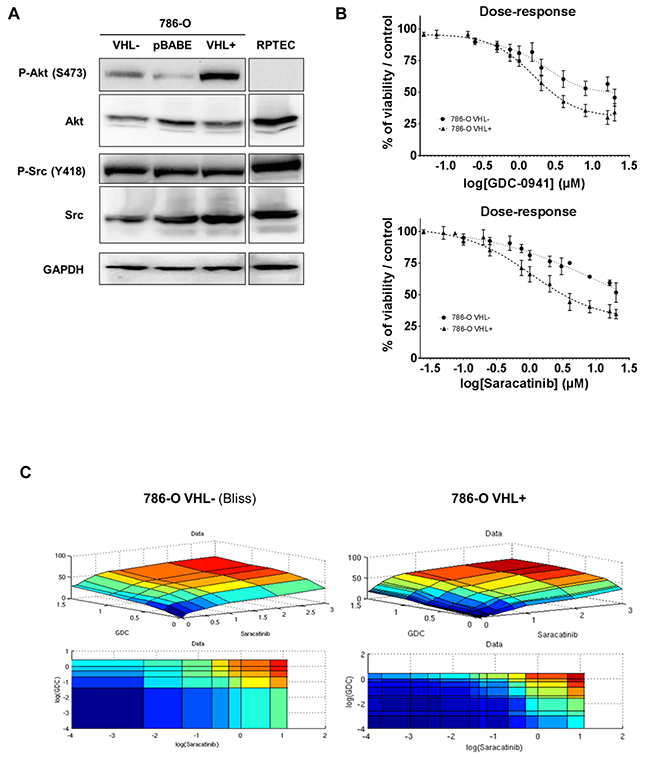 Protein kinases Src and Akt as targets in renal tissues and cell lines.