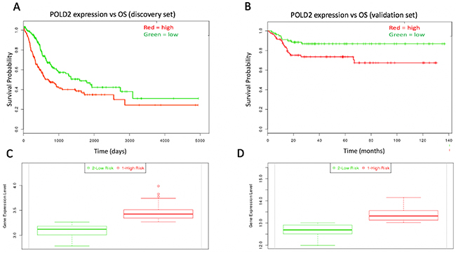 Kaplan-Meir curves for individual prognostic effect of POLD2 gene expression related to OS in bladder urothelial cancer patients.