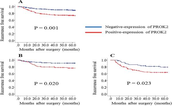 Recurrence-free survival (RFS) rates compared between positive and negative prokineticin 2 (PROK2) expression.