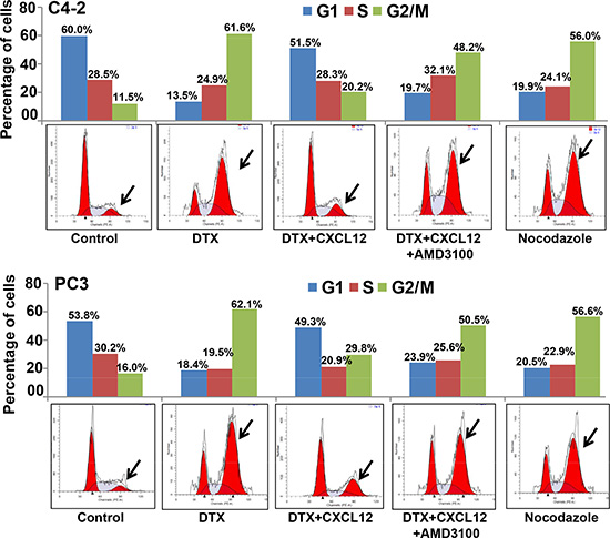 Activation of CXCL12/CXCR4 signaling relieves docetaxel-induced G2/M cell cycle arrest.