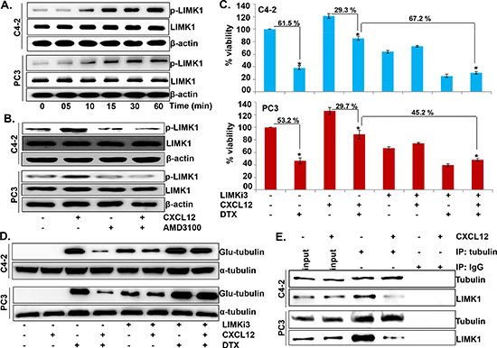 LIMK1 mediates CXCL12/CXCR4-induced destabilization of microtubules and docetaxel resistance.