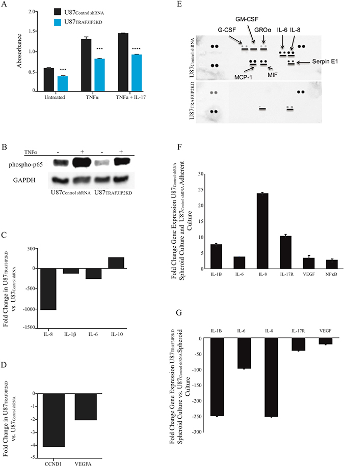 Silencing TRAF3IP2 inhibits NF-κB activation and inflammatory cytokine expression in malignant glioblastoma cells.