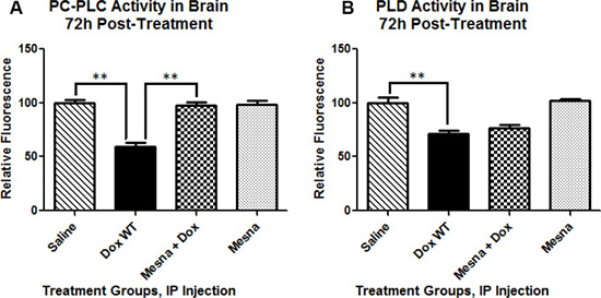 Phosphatidylcholine-specific phospholipase C (PC-PLC) and Phospholipase D (PLD) activity in brain 72 h post-treatment presented as percent saline control.