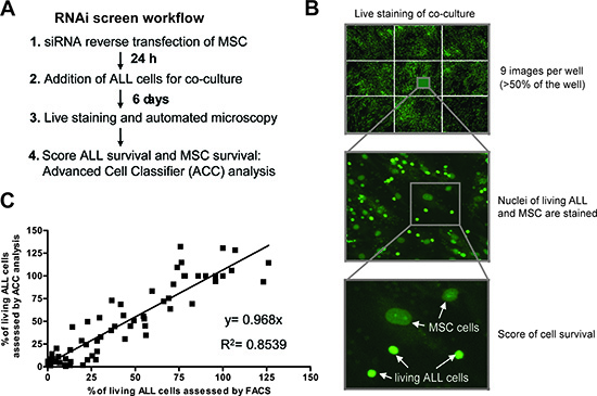 Live cell imaging based RNAi screening platform to examine ALL cell viability in co-cultures.