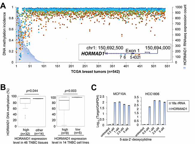 Ectopic expression of HORMAD1 in breast cancer is associated with DNA hypomethylation.
